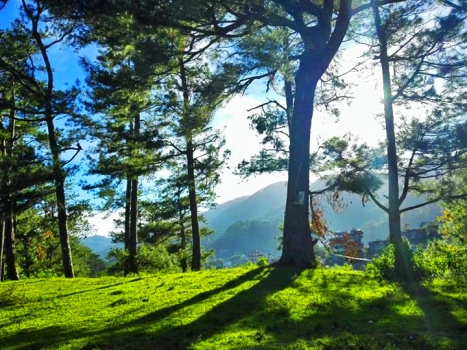 inandakos-bnb-sagada-pine-tree